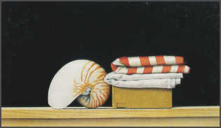 Wim Blom  Shell and cloth Charcoal and water colour 35 x 52 cm